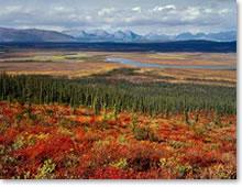 Arctic National Wildlife