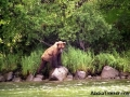 bear_fishing