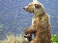 bear_with_cub