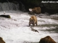 bear_with_fish