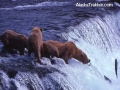 bears_fishing_brooks_falls