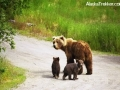grizzly_with_cubs