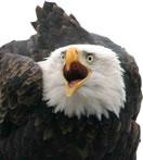 contact_eagle