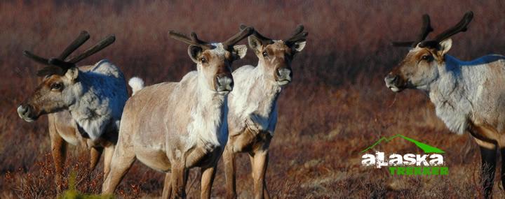 Arctic_National_Wildlife_Refuge