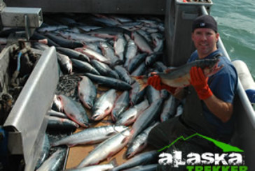 Alaska's fish are very clean