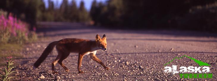 alaska_hunting