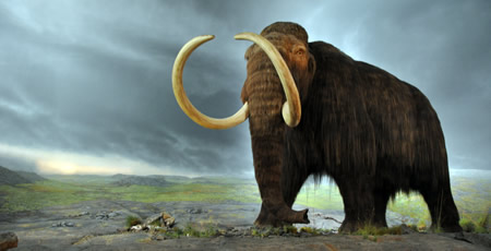 alaska_woolly_mammoth