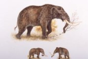 Mastodons long gone from the north