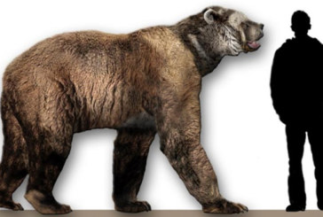 The dominant predator of North America?