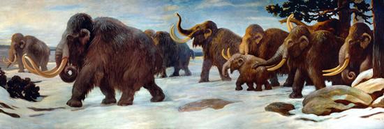 wooly_mammoths_in_alaska
