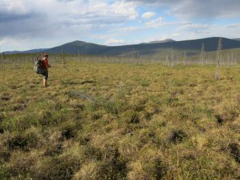 Jay Cable of Fairbanks walks through field of tundra plants in northern Alaska.  Photo by Ned Rozell.
