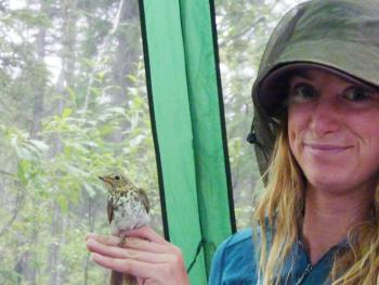 Jenny Carlson of the University of California, Davis with a captured Swainson's thrush in Coldfoot, summer 2012.  Image by Ravinder Sehgal.