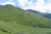 Denali plants more diverse up high