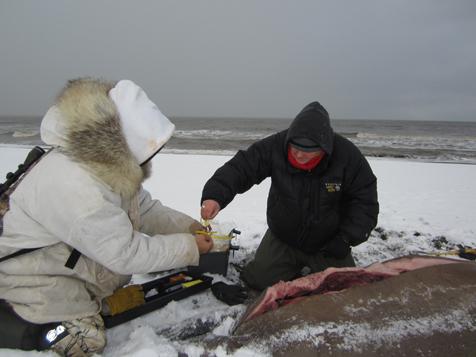 walrus_sampling