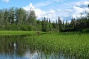 Moose Not Easy To See On Big Alaska River