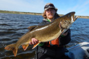 Northern Alaska Lake Trout Living in Mystery