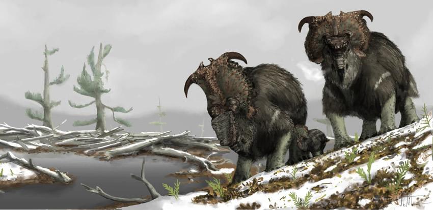 Pachyrhinosaurus_alaska
