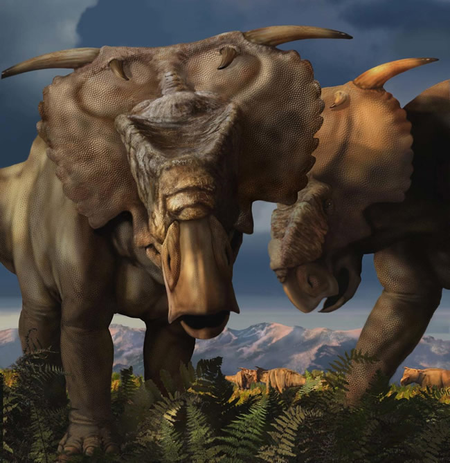 Pachyrhinosaurus_Perotorum