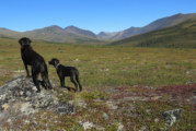Dogs Have Made Alaska Home For Thousands Of Years