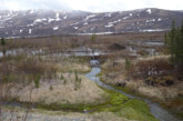 Beavers Moving Into Northern Alaska Due To Climate Change